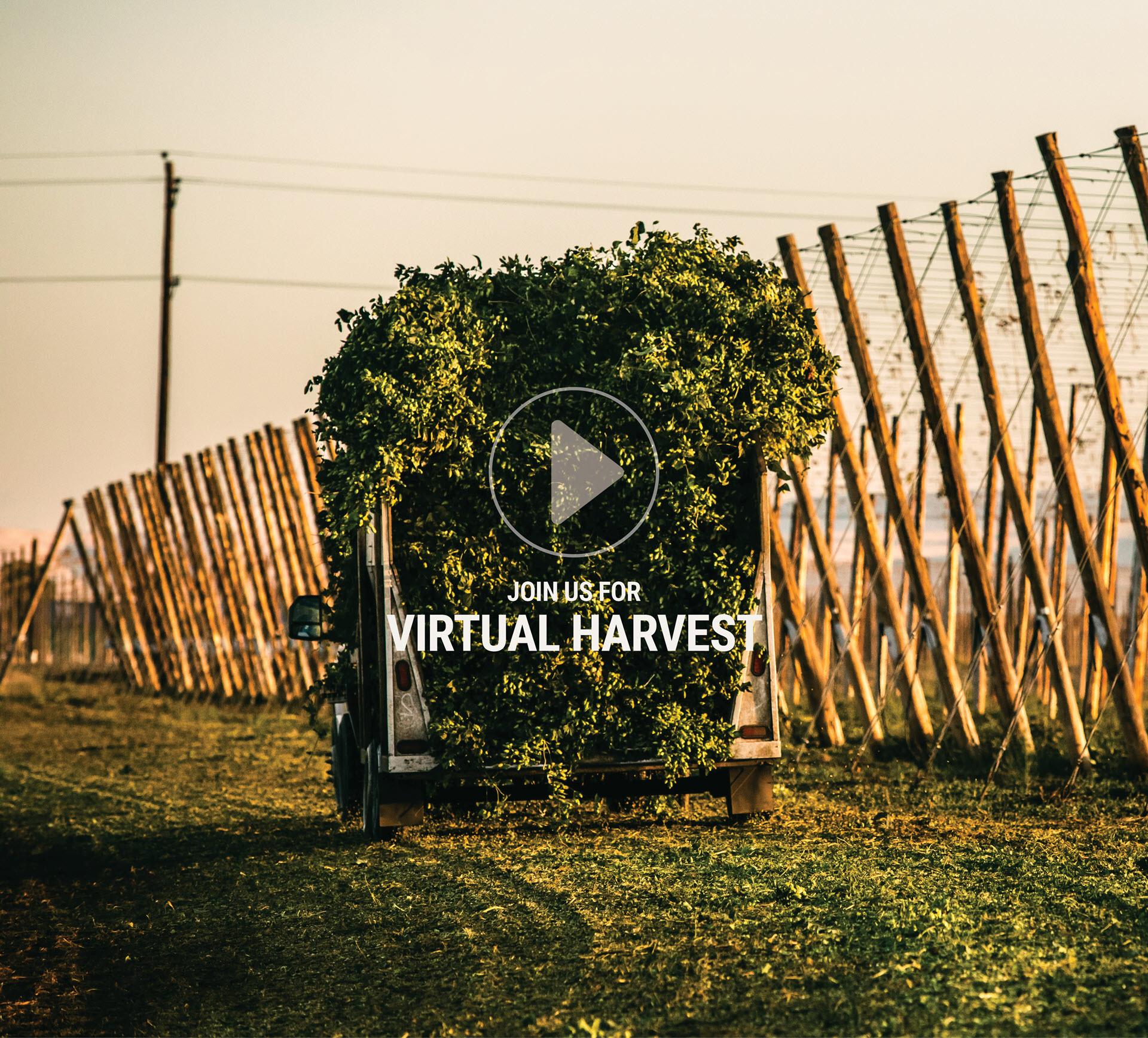 Virtual Harvest