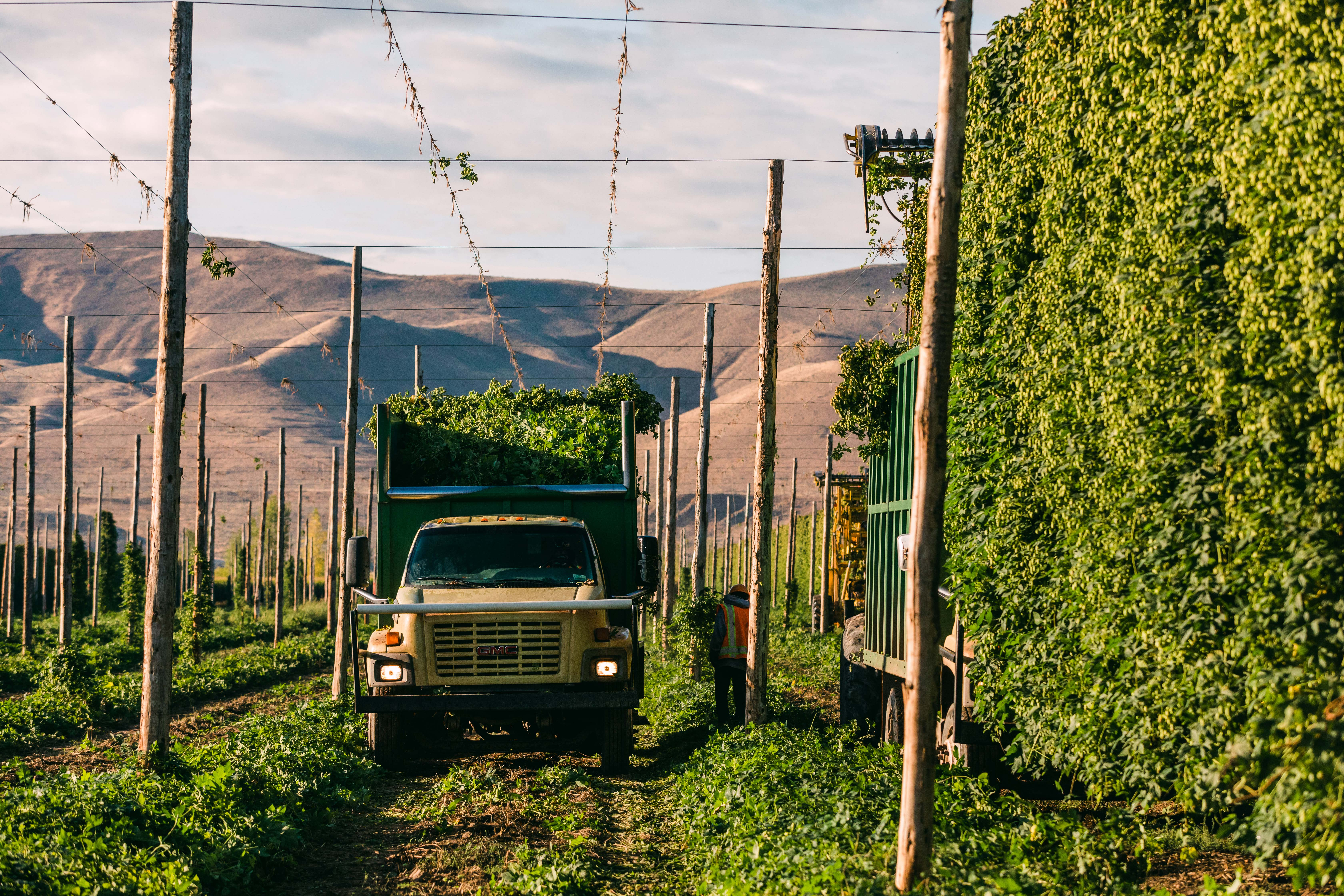 2021 Pacific Northwest Hop Harvest Update